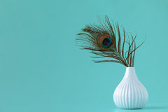 Peacock feather  in vase Royalty Free Stock Photo