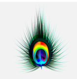 Peacock feather Vector illustration Stock Photos