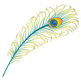 Peacock feather vector illustration. Beautiful multicolored peacock feather, isolated on white background. Vector illustration and colorful book page design Stock Photos