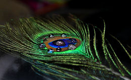 A peacock feather. With water drops Stock Image