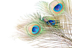 Peacock feather on white Royalty Free Stock Photo