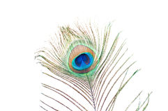 Peacock feather on white Stock Photo