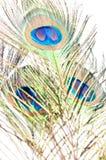 Peacock feather on white Royalty Free Stock Photo
