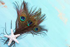 A Peacock feather Royalty Free Stock Images