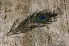 Peacock feather. On a wooden surface Stock Photos