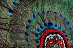 Peacock feathers. Decorative with red background royalty free stock images