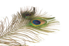 Peacock Feathers. Two peacock feathers on white background Stock Photo
