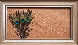 Peacock feathers abstract wood Royalty Free Stock Photo