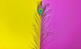Free Peacock Feathers Art,peacocks Tail,written Text Space,peacock Feathers On Pink Background,peacock Tail On Yellow Background,pink Stock Photo - 163147790