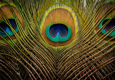 Peacock feathers background Stock Photos