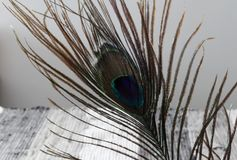 Peacock feathers. Feathers background. Colorful Peacock feathers. Feathers texture. royalty free stock photo