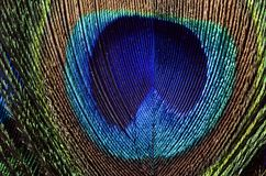 Peacock feathers macro Royalty Free Stock Photos