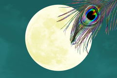Peacock feathers in moon background with text copy space. Blog art banner web design concept background stock illustration