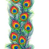 Peacock feathers seamless pattern. Color hand drawn exotic bird plumage vector illustration
