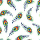 Peacock feathers seamless pattern. Color hand drawn exotic bird plumage stock illustration