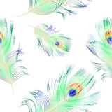 Peacock feathers - seamless pattern Stock Image