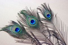 Peacock feathers. Three peacock feathers on a wooden background Stock Images
