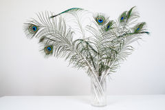 Peacock feathers in vase on white wood table Stock Photo