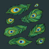 Peacock feathers vector abstract set Stock Images