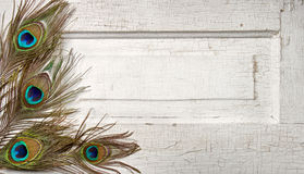 Peacock feathers on vintage door Royalty Free Stock Image