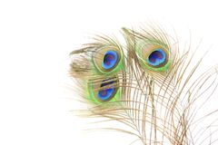 Peacock feathers on white background. Royalty Free Stock Images