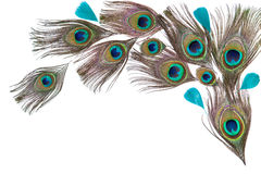 Peacock feathers on the white background Stock Photo