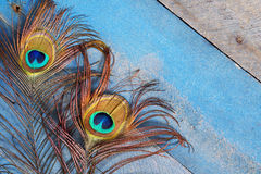 Peacock feathers on wood at angle Stock Images
