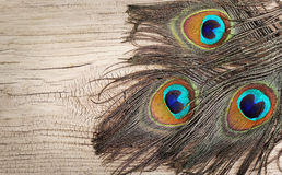 Peacock feathers on wooden board Stock Photography