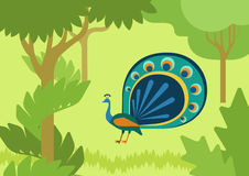 Peacock flowing tail flat design cartoon vector wild animal bird. Peacock with flowing tail in forest habitat flat design cartoon vector wild animals birds. Flat stock illustration