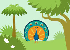 Peacock flowing tail flat design cartoon vector wild animal bird. Peacock with flowing tail in forest habitat flat design cartoon vector wild animals birds. Flat royalty free illustration