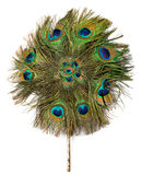 Peacock hand fan isolated Stock Photography
