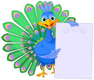 Peacock holding placard Royalty Free Stock Photography