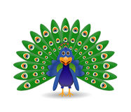 Peacock illustration  Royalty Free Stock Photo