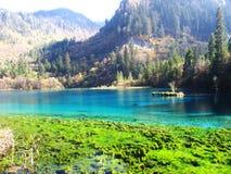 Peacock lake. In jiuzhaigou valley scene,sichuan province Stock Photography