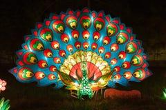 Peacock light Royalty Free Stock Photo