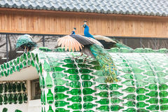 Peacock at Nami island in South Korea. stock image