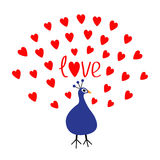 Peacock Open red heart set tail. Word Love text. Zoo animal collection. Exotic tropical bird. Cute cartoon character. Blue color. Stock Image