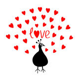 Peacock Open red heart set tail. Word Love text. Zoo animal collection. Exotic tropical bird. Cute cartoon character. Happy Valent Royalty Free Stock Images
