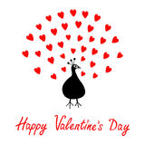 Peacock Open red heart set tail. Zoo animal collection. Exotic tropical bird. Cute cartoon character. Happy Valentines Day. Greeti Royalty Free Stock Photos