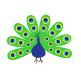 Peacock with open tail. Feather out. Beautiful Exotic tropical bird. Zoo animal collection. Cute cartoon character.  Stock Photo