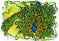 Peacock Parade Royalty Free Stock Image