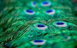 Peacock patterns Royalty Free Stock Images