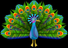 Peacock, Peafowl, Peachick, Bird Stock Image