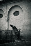 A peacock perched on a wall in a garden in Seville, Spain, Europ Royalty Free Stock Photos