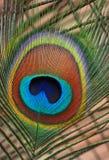 Peacock Plume Royalty Free Stock Photos