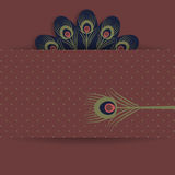 Peacock retro background Stock Images