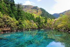 Peacock River in Jiuzhaigou stock images