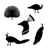 Peacock set vector. Peacock set of black silhouettes. Icons and illustrations of animals. Wild animals pattern stock illustration