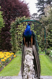 Peacock sitting on the statue Royalty Free Stock Photography