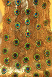 peacock tail Stock Images